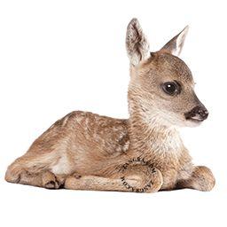 kids038_002_s-wall-sticker-autocollant-bambi-hert-ree-faon-fawn-reekalf