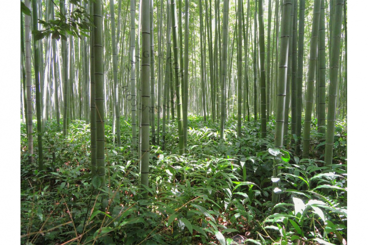 toilette-eco-responsable-bambou-papier